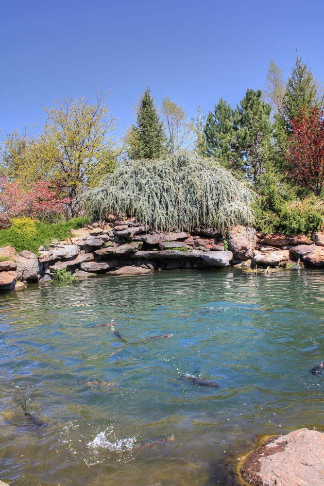 stocked-pond-2